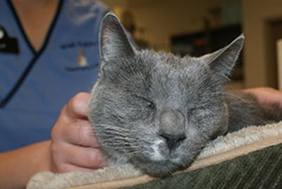Happy cat relaxing at our animal hospital