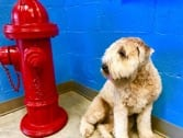 Pet Diagnostics in Charleston, SC: Dog next to fire hydrant